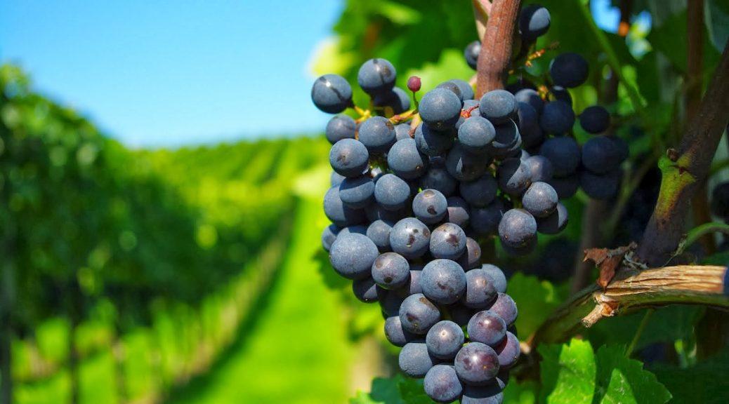 los mejores viñedos para realizar un tour cerca de Barcelona